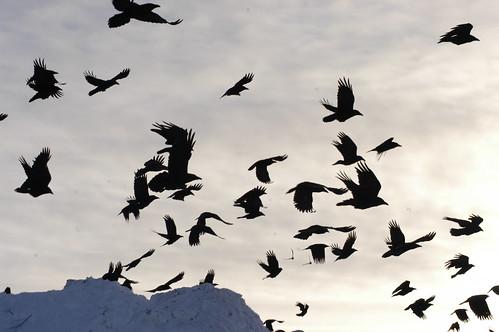 Bethel Birds