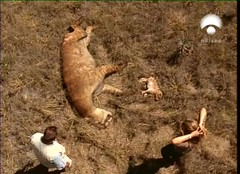 Nigel and Saba arrived when famine had already killed the cub