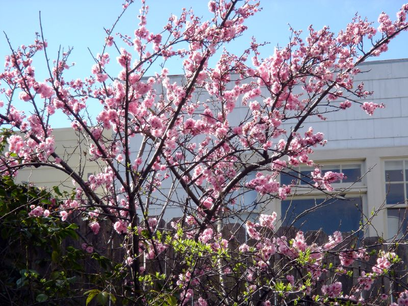 Blossoms in Garden