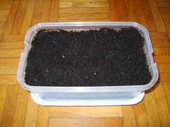 semenzaio (jackefelef) Tags: passiflora