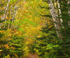 North Woods of Wisconsin (Sandra Leidholdt) Tags: autumn trees usa fall nature colors wisconsin america forest automne us woods midwest fallcolor unitedstates path north autumnleaves trail american autumnal northwoods amricain midwestern autunnale sandraleidholdt autumnno leidholdt sandyleidholdt