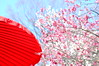 spring color (shizucha) Tags: red flower color japanese apricot 4spring d40