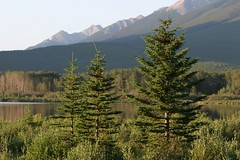A Set of Three (halfgeek) Tags: trees natural alberta badge banffnationalpark vermilionlakes pleasantlytilted