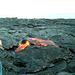 Hot+Lava+in+Hawaii