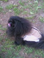 Dog park Lulu