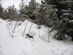 Extreme snow Whippets!