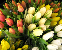 florabundance (Really Helen,very very busy) Tags: flower macro nature yellow catchycolors spring tulips blossom vivid tulip bloom