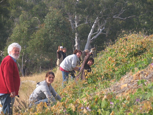 students planting trees on the swale