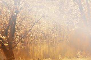 Golden summer...