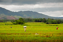 Quirino-07 (highlights.photo) Tags: travel nature asia philippines culture luzon quirino aglipay quirinoprovince cabarroguiz aglipaycave