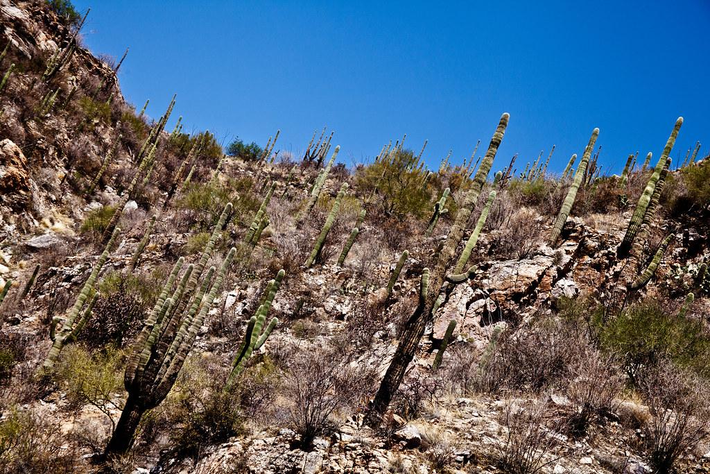 Arizona Desert: Sabino Canyon in Tucson