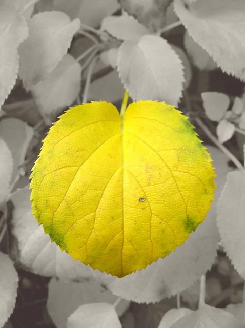 Yelloween