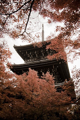 (yocca) Tags: autumn japan wow temple kyoto momiji soe 2007 shinnyodou  beautifulcapture shieldofexcellence nov2007