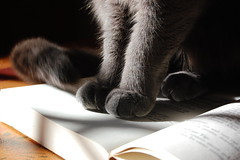 Cat on Cookbook (mostlysunny1) Tags: kitchen grey cookbook feline meadow sweetpea paws ilovemycat untouched russianblue asis pookusmcghee