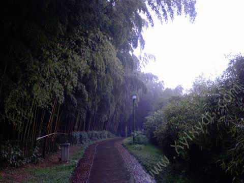 杭州植物园,玉泉