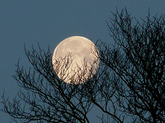 Moon (Little Boffin (PeterEdin)) Tags: trees moon tree lumix shadows space satellite hill fullmoon moonrise lua planets lunar orbit caltonhill moonset observatories calton panasoniclumix dmctz3 tz3 panasonictz3 panasonicdmctz3 edinburghdisgrace