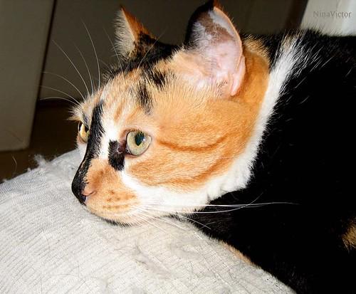 Durga, a gatinha companheira