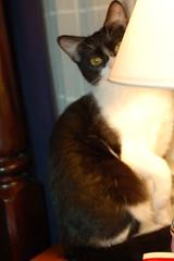 Katydid (Aidylsock) Tags: cats pets katydid