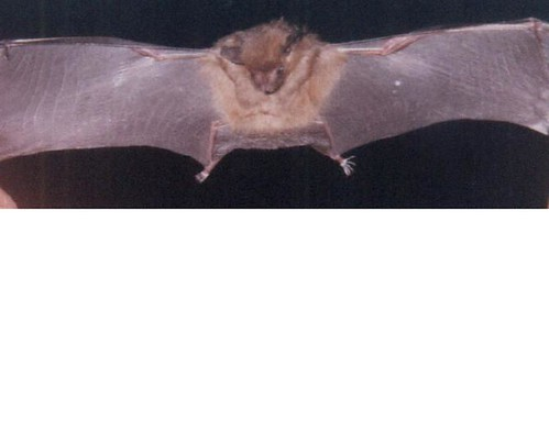 2229971125_6fafe78891 - CRAZY ABOUT BATS! - Science and Research