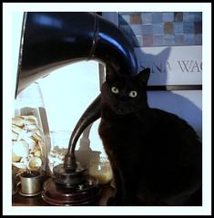 Rosina Wacthmeister 1 (marta) Tags: cats chats gatos katze gatti greta diamondclassphotographer ilovemypic rosinawacthmeister