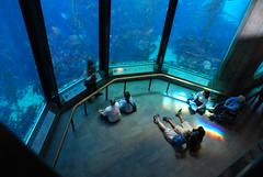Feeding Time (jillmotts) Tags: fish aquarium marine montereybayaquarium kelpforest montereyca jillmotts d40x