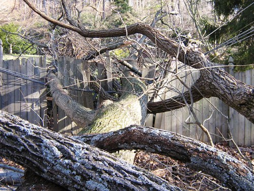 bells mill tree on fence wire