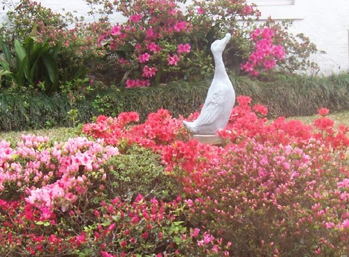 Duck statue in flower bed
