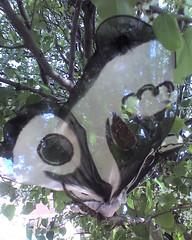 Streetart Butterfly