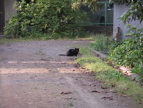 あら、こんなところに黒猫が