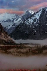 Above the Tree Line (MunishKailaPhotography) Tags: half dome yosemite valley national park mountain scene storm winter stormy mourning clouds colors trees forest above tree line tunnel view sierra landscape nature outdoor