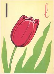 l tulipe