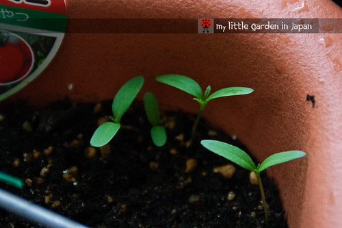 seedlings-and-sproutings-2