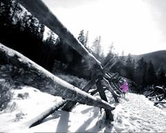 pink_woods.jpg