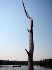 quiet (.camila) Tags: nature água azul brasil lago quiet céu cerrado tronco tranquilidade goiás araguaia natureba
