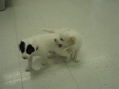 puppies! 010