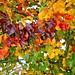couleurs d'automne / autumn colours