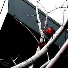 (fusion-of-horizons) Tags: autumn fall architecture campus de photography photo university fotografie photos cincinnati architect thom uc mayne morphosis thommayne arhitectura arhitect noncoloursincolour arhitectur universityofcincinnatirecreationcenter