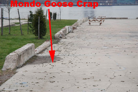 East River State Park Goose Crap