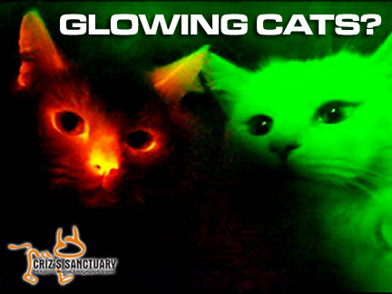 GLOWINGCATS