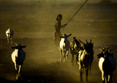 Girl and leading her goats, Danakil, Ethiopia (Eric Lafforgue) Tags: africa people horizontal standing outdoors photography day african fulllength culture tribal tradition agriculture ethiopia dust tribe ethnic livestock herd oneperson tribo traditionalculture hornofafrica ethnology afar eastafrica thiopien etiopia ethiopie traditionalclothing realpeople etiopa colorimage ruralscene armsraised largegroupofanimals  traveldestination danakil etiopija africanethnicity pastoralist ethiopi  etiopien etipia  etiyopya  unrecognizableperson   asaita mg1842  assayta