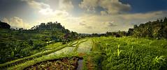 Tirtagangga - Bali (Auré from Paris) Tags: travel bali panorama green nature water grass clouds indonesia landscape bravo asia rice hill culture panoramic fields asie ricefields dri indonesie paddyfields canoneos5d tirtagangga digitalblending auré terrases