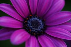 Flower - Macro
