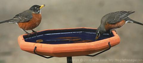 birdbath1