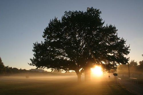 Sunrise in Hagley Park, Christchurch, NZ.