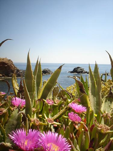Lía :: Pitas y crespinillos