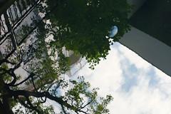 鏡空を渡る (Yuri Yorozuna / 萬名 游鯏(ヨロズナ)) Tags: 横浜 yokohama 水海月 水水母 ミズクラゲ 水クラゲ クラゲ 海月 水母 生物 生き物 反射 reflection 水面 watersurface 河口 estuary rivermouth 川 河川 river 谷戸橋 yatobridge 元町 元町・中華街 山手 yamate motomachi 映り込み 映りこみ ヨツメクラゲ moonjelly waterjelly jellyfish jelly aureliaaurita 神奈川県 kanagawa japan pentaxautotakumar55mmf18