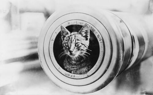 無料写真素材, 動物 , 猫・ネコ, モノクロ, 大砲