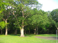 trees at foxboro park