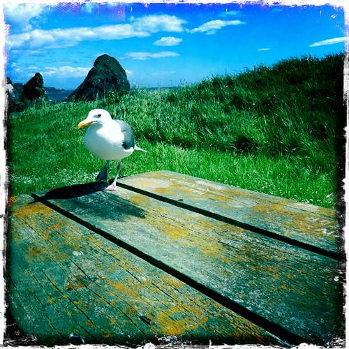 a new friend at our beach picnic near Brookings, Oregon