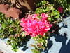 Flower No-Macro (AtomicAJ) Tags: sonydscw90